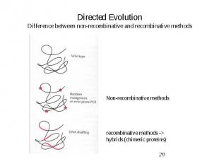 Directed Evolution Difference between non-recombinative and recombinative method