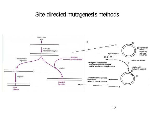 Site-directed mutagenesis methods