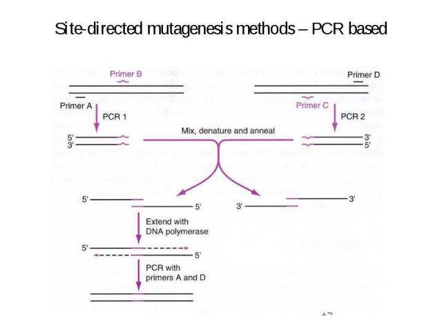 Site-directed mutagenesis methods – PCR based
