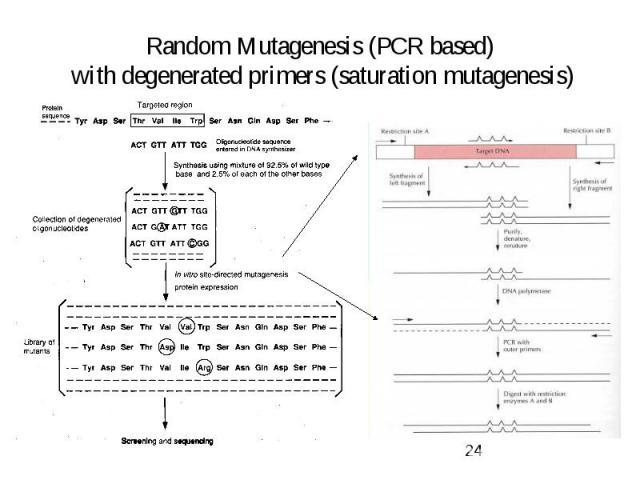 Random Mutagenesis (PCR based) with degenerated primers (saturation mutagenesis)