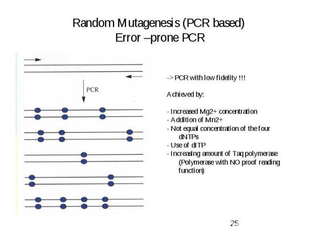 Random Mutagenesis (PCR based) Error –prone PCR
