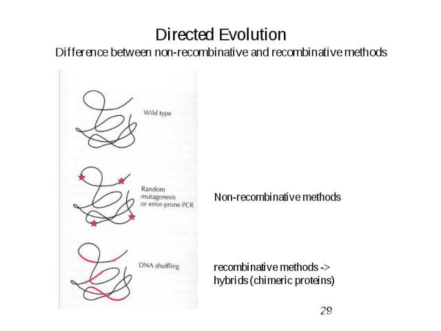 Directed Evolution Difference between non-recombinative and recombinative methods