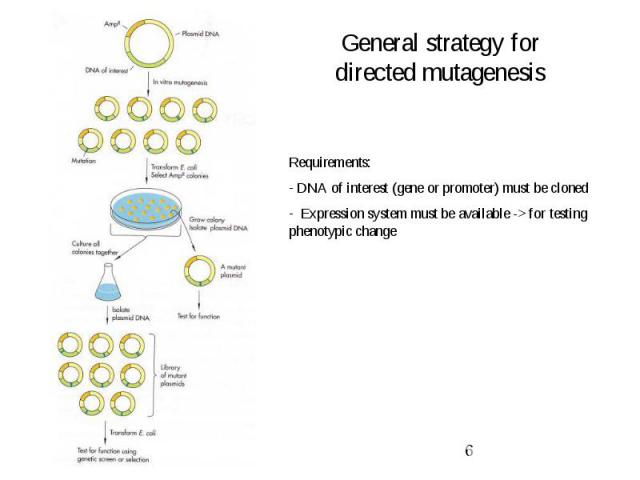 General strategy for directed mutagenesis
