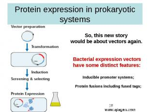 Protein expression in prokaryotic systems