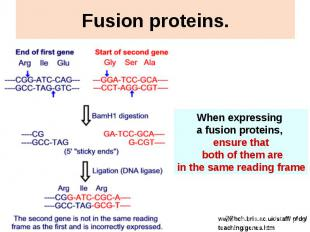 Fusion proteins.