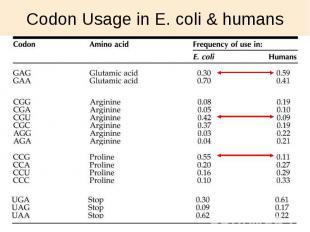 Codon Usage in E. coli & humans
