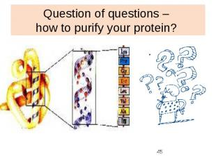 Question of questions – how to purify your protein?