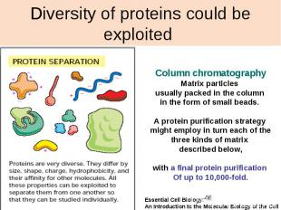 Diversity of proteins could be exploited