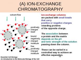 (A) ION-EXCHANGE CHROMATOGRAPHY