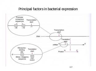 Principal factors in bacterial expression