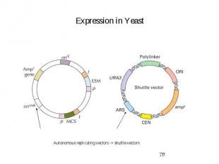 Expression in Yeast
