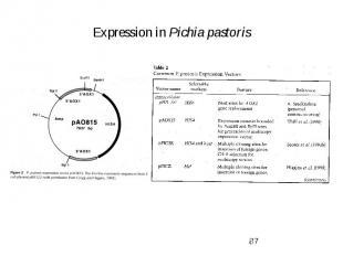 Expression in Pichia pastoris