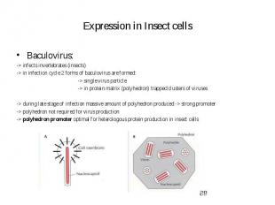 Expression in Insect cells Baculovirus: -> infects invertebrates (insects) -&