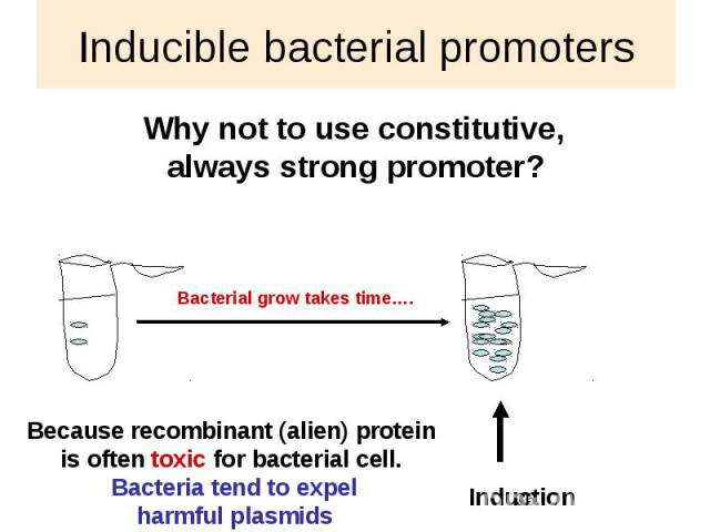 Inducible bacterial promoters