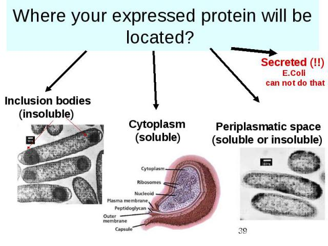 Where your expressed protein will be located?