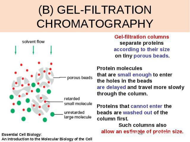 (B) GEL-FILTRATION CHROMATOGRAPHY
