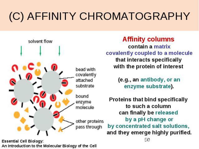 (C) AFFINITY CHROMATOGRAPHY