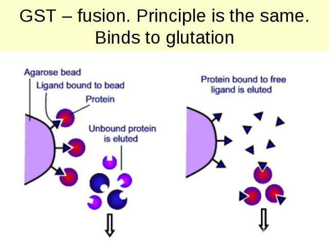 GST – fusion. Principle is the same. Binds to glutation