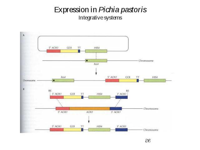 Expression in Pichia pastoris Integrative systems