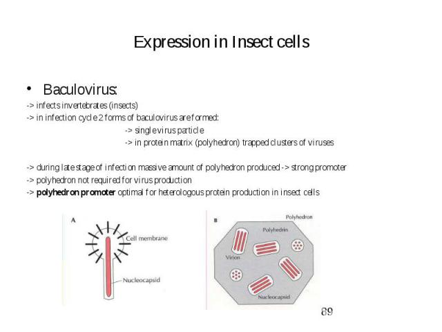 Expression in Insect cells Baculovirus: -> infects invertebrates (insects) -> in infection cycle 2 forms of baculovirus are formed: -> single virus particle -> in protein matrix (polyhedron) trapped clusters of viruses -> during late …
