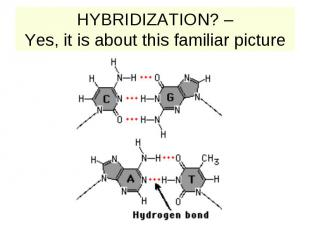 HYBRIDIZATION? – Yes, it is about this familiar picture