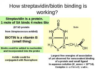 How streptavidin/biotin binding is working?