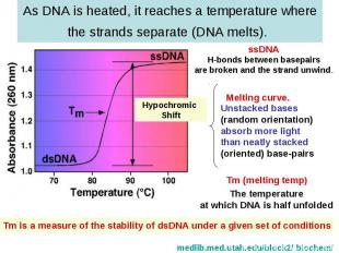 As DNA is heated, it reaches a temperature where the strands separate (DNA melts
