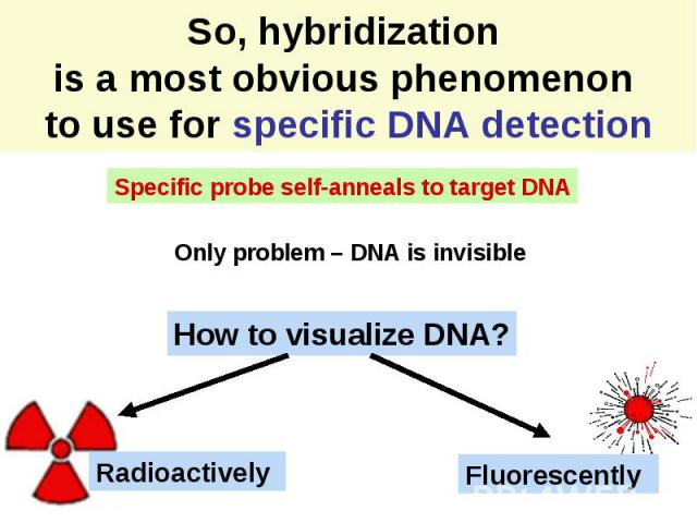 So, hybridization is a most obvious phenomenon to use for specific DNA detection