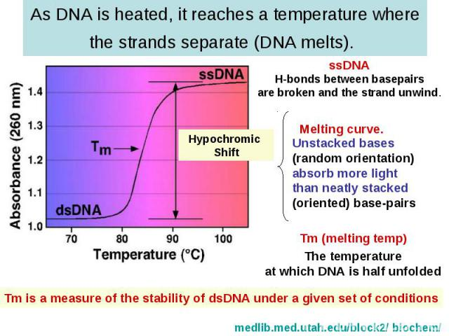 As DNA is heated, it reaches a temperature where the strands separate (DNA melts).