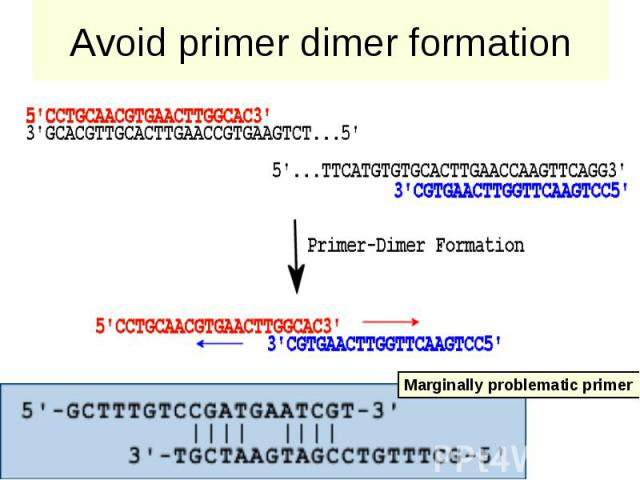 Avoid primer dimer formation