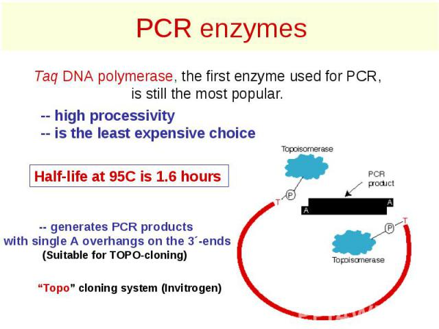 PCR enzymes