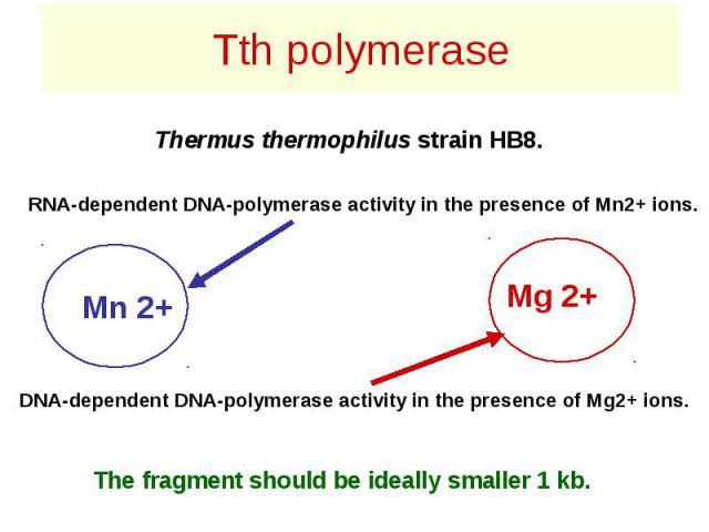 Tth polymerase