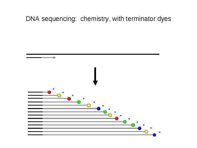 DNA sequencing: chemistry, with terminator dyes