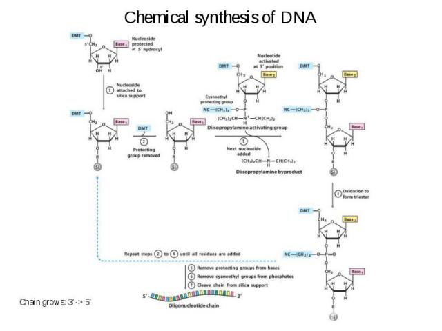 Chemical synthesis of DNA