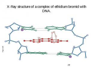 X-Ray structure of a complex of ethidium bromid with DNA.