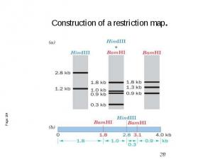 Construction of a restriction map.
