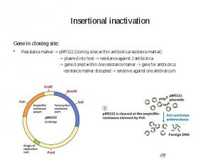 Insertional inactivation Gene in cloning site: Resistance marker -> pBR322 (c