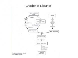 Creation of Libraries