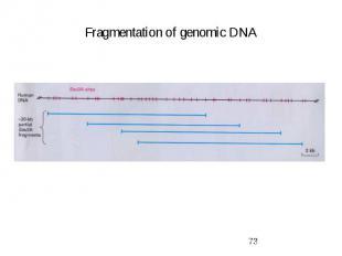 Fragmentation of genomic DNA