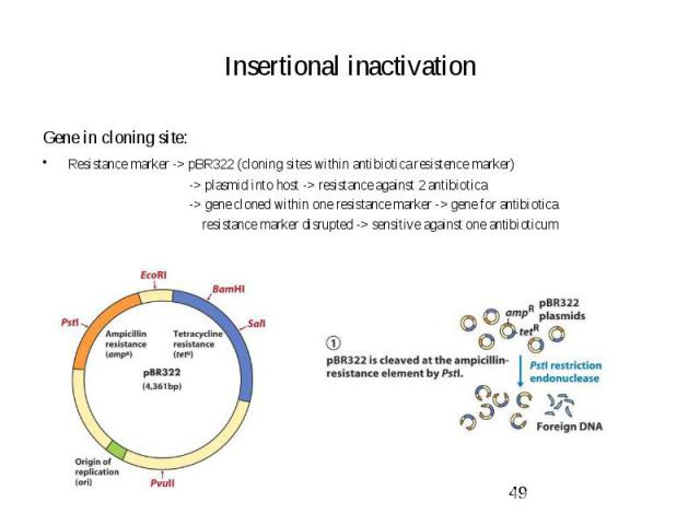 Insertional inactivation Gene in cloning site: Resistance marker -> pBR322 (cloning sites within antibiotica resistence marker) -> plasmid into host -> resistance against 2 antibiotica -> gene cloned within one resistance marker -> ge…