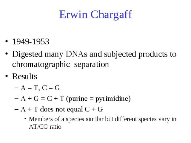 Erwin Chargaff 1949-1953 Digested many DNAs and subjected products to chromatographic separation Results A = T, C = G A + G = C + T (purine = pyrimidine) A + T does not equal C + G Members of a species similar but different species vary in AT/CG ratio