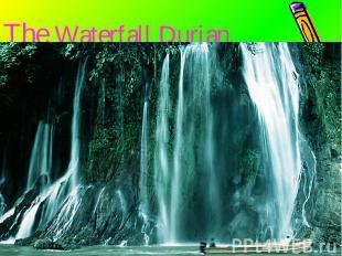 The Waterfall Durian