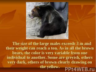 The size of the large males exceeds 3 m and their weight can reach a ton. As in
