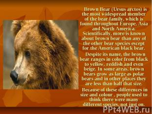 Brown Bear (Ursus arctos) is the most widespread member of the bear family, whic