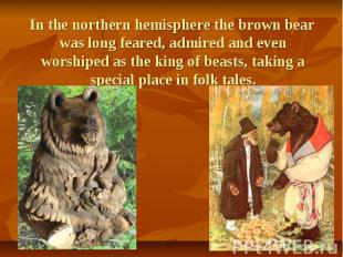 In the northern hemisphere the brown bear was long feared, admired and even wors