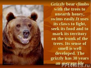 Grizzly bear climbs with the trees to unearth honey, swims easily.It uses its cl