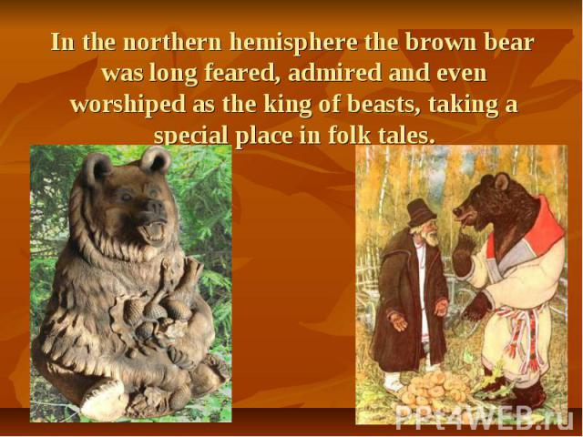 In the northern hemisphere the brown bear was long feared, admired and even worshiped as the king of beasts, taking a special place in folk tales. In the northern hemisphere the brown bear was long feared, admired and even worshiped as the king of b…