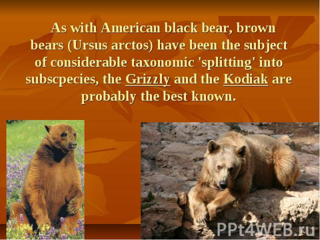 As with American black bear, brown bears (Ursus arctos) have been the subject of considerable taxonomic 'splitting' into subscpecies, the Grizzly and the Kodiak are probably the best known. As with American black bear, brown bears (Ursus arctos) hav…