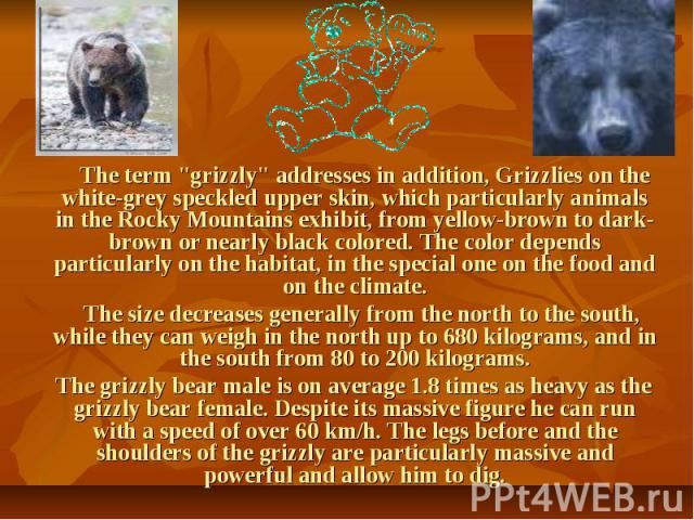 "The term ""grizzly"" addresses in addition, Grizzlies on the white-grey speckled upper skin, which particularly animals in the Rocky Mountains exhibit, from yellow-brown to dark-brown or nearly black colored. The color depends particularly o…"