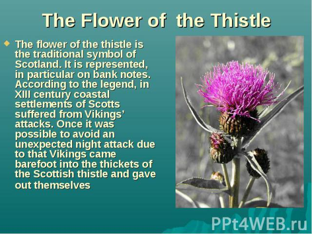 The Flower of the Thistle The flower of the thistle is the traditional symbol of Scotland. It is represented, in particular on bank notes. According to the legend, in XIII century coastal settlements of Scotts suffered from Vikings' attacks. Once it…